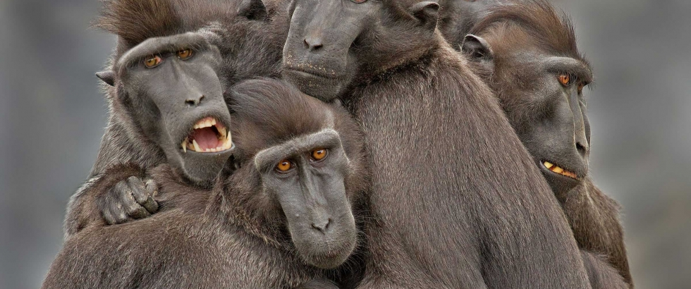 Monkey family by © Jozef